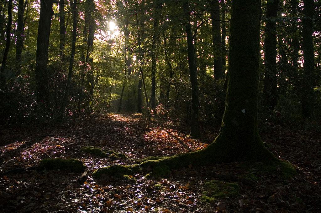 Forêt : coin à champignons