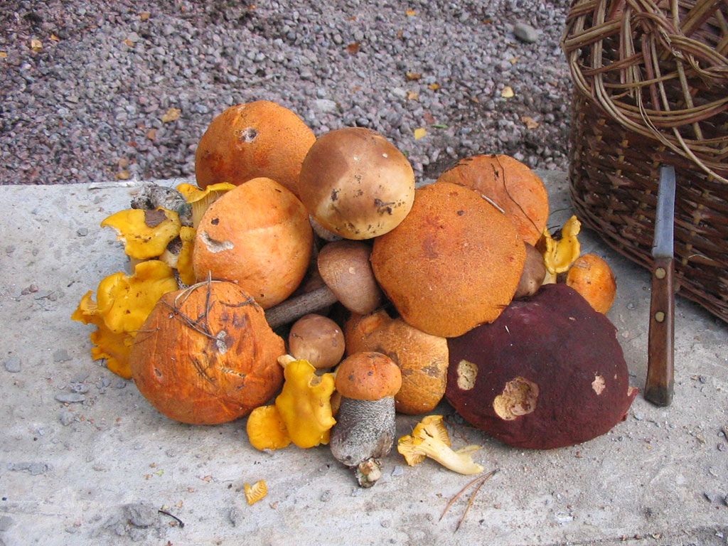 Nettoyage champignons